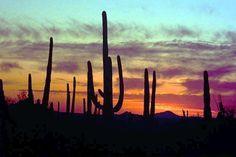 Arizona has the most amazing sunsets.
