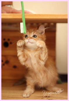 Gimme that toothbrush!