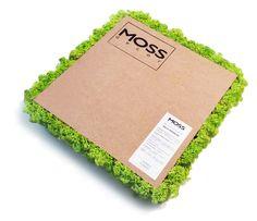 Moss Wall Art, Moss Art, House Plants Decor, Plant Decor, Vegetal Concept, Moss Decor, Fleur Design, Vertical Garden Wall, House Furniture Design