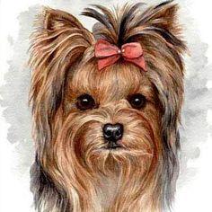 Yorkshire #Yorkie Terrier #Dogs #Puppy