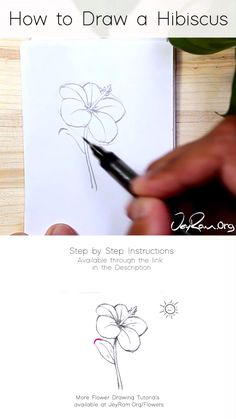 Learn how to draw Hibiscus flower with this simple step by step tutorial made for beginners. These pencil sketches are perfect for your bullet journals and sketchbooks, join me on this artistic…More Flower Drawing Tutorials, Flower Sketches, Drawing Tips, Art Tutorials, Drawing Ideas, Flower Sketch Pencil, Drawing Art, Pencil Art Drawings, Art Drawings Sketches