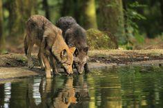 reino animals