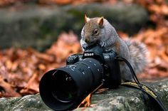 Squirrel with camera. Ha!!! Now THAT'S my kinda squirrel!!! :-))) {It's even a Nikon!} ;-)