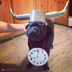 Skylar: Everything is homemade in Otis's costume. The hat is two toilet paper rolls wrapped in tape an glues to an upside down bowl then spray painted. The clock is a...