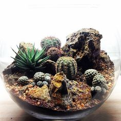 Bioattic Terrariums are beautiful miniature landscapes, a slice of nature housed in glass. Terrariums are perfect for adding stunning plant life to your home or office. Below showcases a brief selection of 'Desert World' & 'Forest World'…