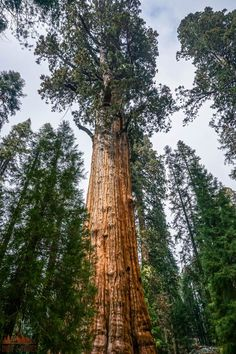There are so many things to do in Sequoia National Park, but if this is your first road trip to the park it can be a little overwhelming. Don't worry, this list includes all the things you can't miss while on your vacation, plus a bunch of information to help you make your way around the park. Whether or not you like hiking and camping this list will make it easy to have a fun adventure. California National Parks, Us National Parks, California Travel, Best Places To Camp, Places To Go, Sequoiadendron Giganteum, Beautiful Places In California, New Orleans, Las Vegas