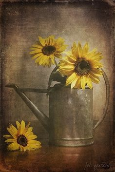 Down Sunflower Lane Sunflower Pictures, Sunflower Art, Happy Flowers, Beautiful Flowers, Painting On Wood, Painting & Drawing, Sunflowers And Daisies, Sunflower Wallpaper, Canvas Art