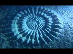 Underwater crop circles.  Now known to be created by fish. Darn!