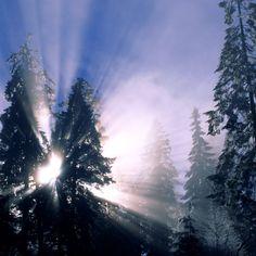 2048x2048 Wallpaper inverno, sol, luz, vigas, árvores, iluminação, manhã