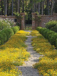 Que jardim mais incrível com esse caminho de flores amarelas e o portão com tijolinhos! Posso morar nesse lugar? 10 boas ideias de caminhos de jardins - Casa