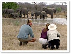 South Africa walking safari brings you real close! African Animals, African Safari, South Africa Safari, Safari Adventure, Travel Tours, Nature Reserve, Holiday Destinations, Holiday Travel, Oh The Places You'll Go