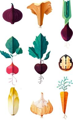 Drawings of vegetables on Behance
