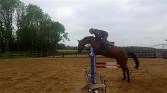 Paarden te koop: Darinosa