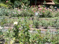 Plants, Gardens, Plant, Planets