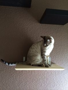 Bamboo cat shelf by CatastrophiCreations on Etsy, $25.00