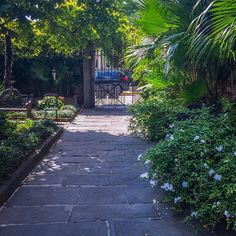 Cleaning the path~  #seeyoutomorrow ! #CafeAmelie #NolaEats #NewOrleans #Louisiana #Delicious #FrenchQuarter #SecretGarden #VisitNewOrleans #followyournola #NOLA #courtyard