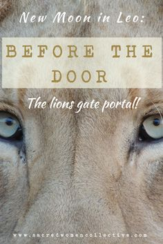 New Moon Leo ~ Before The Door ~ The Lions Gate Portal — Jade Mason//Sacred Women Moon In Leo, New Moon, Sirius Star, Spiritual Enlightenment, Spirituality, Lions Gate, Myers Briggs Personalities, Full Moon, Taurus