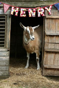 Just need to get a goat. @Kellie Gonzales mom yall NEED to make yalls goat a house LOL