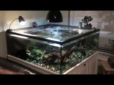 turtle tank turtle tank setup. - This is close look at the sump tank ...