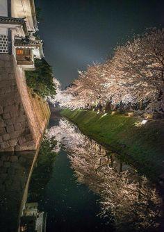 Kanazawa Castle and cherry trees at night, Japan