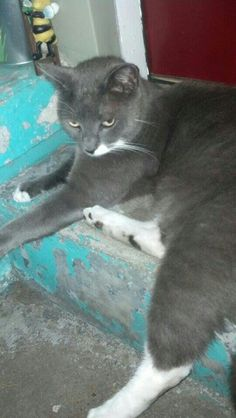 Buddy. Nanna's cat