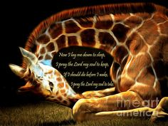 text,word,words,allegory,allegorical,prayer,prayers,philosophy,words of wisdom,wisdom,the lord,lord,god,jesus,christ,religion,religious,praying,christian,christianity,catholic,catholicism,heaven,animal,animals,nature,outdoor,wildlife,giraffe,giraffes,giraffidae,zoo,zoos,zoo animal,zoo animals,tall,tall animal,tall animals,long neck,neck,necks,necky,long,creature,mammal,mammals,fun,happy,cheerful,whimsical,pop,popart,pop art,andy warhol,kitsch,kitschy,the,and,or,brunaille,wing…