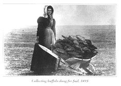 Pioneer woman bring back buffalo chips to burn on the fire where she will cook their supper.