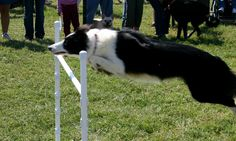 Hurray for the 23rd Annual Dog Olympics