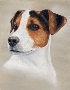 Jack Russell Pastel Painting by Colin Bradley using Pastel Pencils. Learn to draw Animal Pictures with Colin's lessons: https://www.colinbradleyart.com/home/draw-these-animals-using-pastel-pencils/ #PastelPencils #PastelArt #ColinBradleyArt