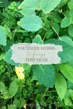 9 Summer Herbs To Forage This Year | Growing Up Herbal | Here are 9 summer herbs to forage right now. These herbs are abundant in the summer, and depending on where you live, they may be in your backyard, too!