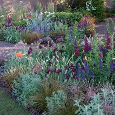 Romantic Blue border (with lilac accents) for sale for £ Buy all kinds of Plants with discounts up to Ordered today = deliverd tomorrow. Garden Deco, Veg Garden, Purple Garden, Colorful Garden, Cottage Garden Borders, Garden Design Magazine, Hardy Perennials, Bulb Flowers, Autumn Garden