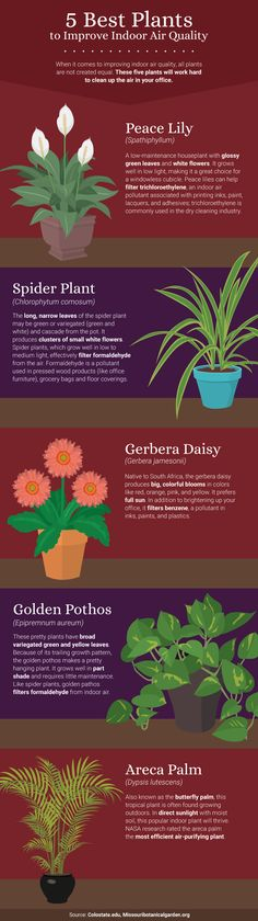 5 Best Office Plants For Air Quality - The Benefits of Office Plants