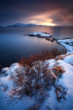 Let it snow ~ in Thingvellir, Iceland