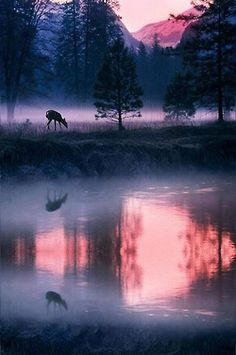 Beautiful as a deer pants for water so my soul longs for you.