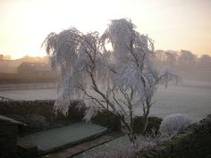 Yorkshire - Morning Frost