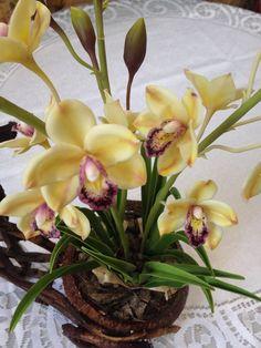 Керамическая флористика создаем орхидею Цимбидиум : deep_child700