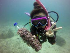 Drupella Snail Monitoring and Control Program - Eco Koh Tao