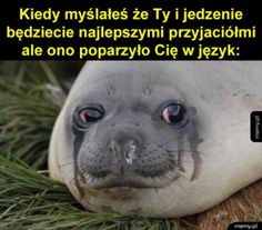 Read from the story MEMY ( ͡° ͜ʖ ͡°) 3 & czarny humor by lejdih (KOTEŁEG) with reads. Wtf Funny, Funny Fails, Funny Dogs, Funny Memes, Jokes, Hilarious, See Games, Weekend Humor, Xbox 1