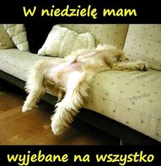 Pictures Of Funny Sleeping Animals; Cute Dog Photos, Dog Pictures, Animal Pictures, Funny Pictures, Funny Dogs, Cute Dogs, Funny Animals, Cute Animals, Funny Drunk