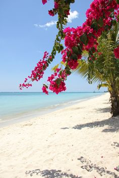 Mauritius - flowers on the beach