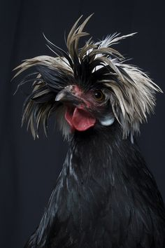 Photo By Jeremy Blinkhorn - having a bad hair day?