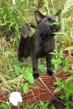 Mint-condition.jpg:  LEMON GRASS, CAT GRASS, GATNIP, CATMINT, PEPPERMINT & VALERIAN... O YEAH...goin 2 get 2 chill out the kittys :)