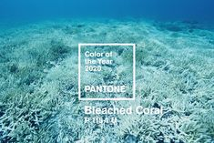 colour of the year 2020 pantone \ colour of the year 2020 pantone ; pantone colour of the year 2020 classic blue ; pantone colour of the year 2020 wedding ; pantone colour of year 2020 ; pantone colour of the year 2020 interiors Off White Color, Coral Color, Coral Art, Paleta Pantone, Coral Bleaching, Pantone 2020, Live Coral, Great Barrier Reef, Color Of The Year