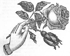 My tattoo, except only the single rose and colored purple Antique Tattoo, Victorian Tattoo, Weird Tattoos, Rose Tattoos, Hand Tattoos, Traditional Hand Tattoo, Flash Drawing, Beautiful Tattoos, Beautiful Body