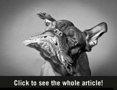 Honden in Slow Motion - BrainFuel