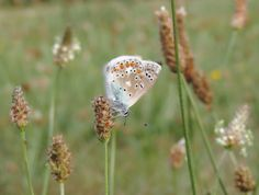 Butterfly in the meadow by Remo Fiebig on 500px