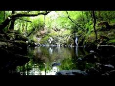 Relaxing 8 Hours of Nature Sounds-Birds Singing-Water Sound Relaxation-Relax Bird Song - YouTube