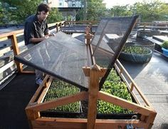 Colin McCrate of Seattle Urban Farm Company checks on a fresh crop of lettuces planted in a raised bed on top of Ballard's Bastille restaurant. The lids are fitted with shade cloth to prevent the lettuces and arugula from bolting in the rooftop's unobstructed sunlight. In winter, glass lids will help protect against the cold.