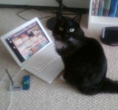 I can haz Internetz?? cute cat