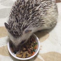 Hedgehog Food, Cute Hedgehog, Baby Animals Pictures, Cute Animals, Overlays, Diy Dog, Future Tense, Pets, Animales